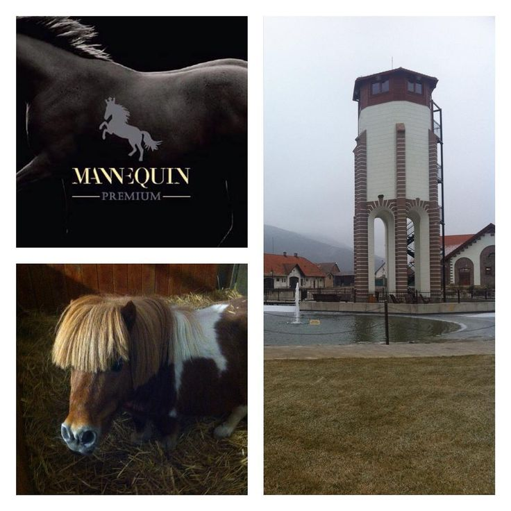 ... a quick visit to Masarykov Dvor - most pretty mini shetty ... #mini #shetty #shettypower #masarykovdvor #equestrian #equestrianstyle #mannequin #trencin #slovakia