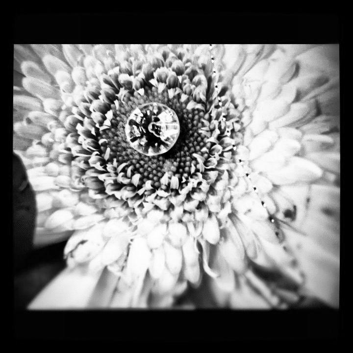 Flower of diamonds