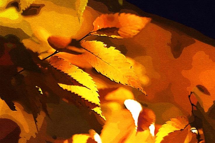 紅葉 大阪 #Osaka #Japan #autumn leaves Osaka Japan autumn leaves