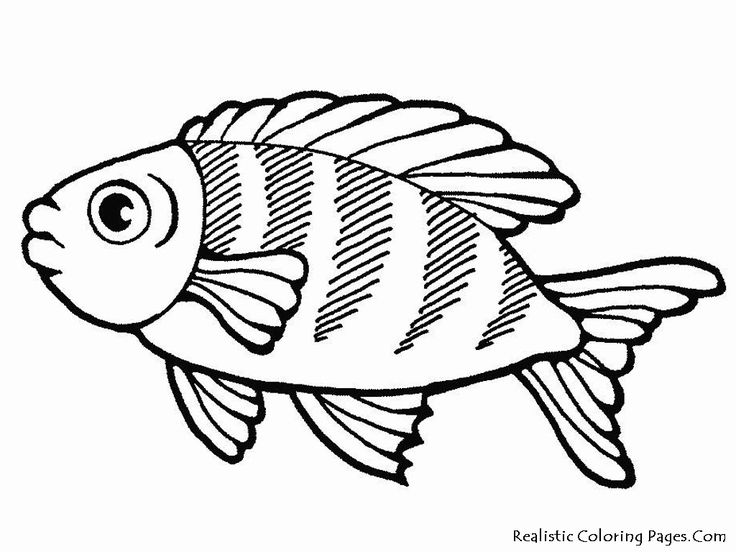 free printable large fish coloring pages images of sea