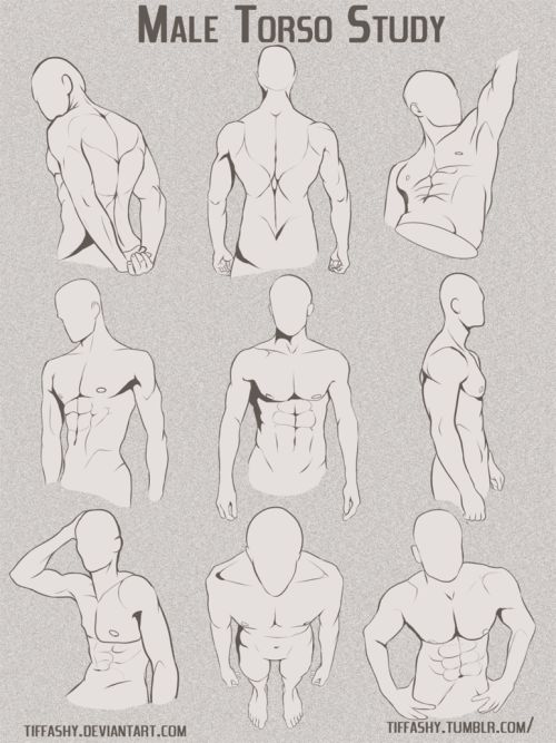 "drawingden: ""Male Torso/Chest Study by TIFFASHY """
