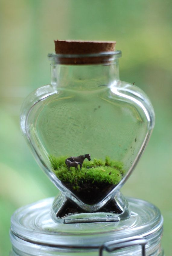 Hey, I found this really awesome Etsy listing at https://www.etsy.com/listing/124334114/tiny-love-moss-terrarium