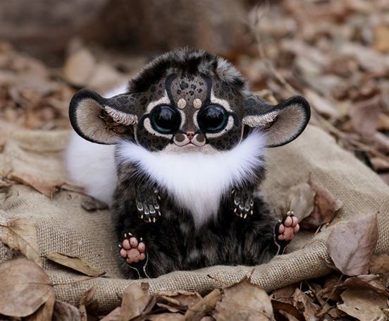 This is an Inari Fox, just the most adorable little thing! reminds me of a furby