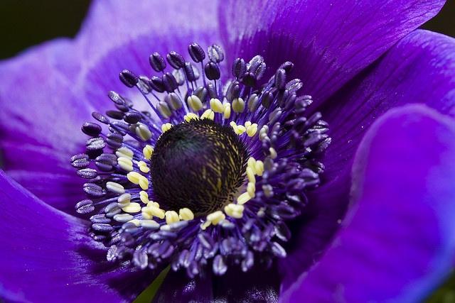 103 besten Pflanzen Bilder auf Pinterest  Grtnern Sukkulenten und Blumen pflanzen
