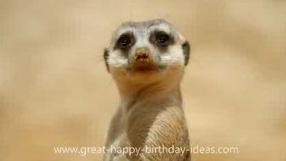 Send Meerkat Birthday Card! for free at http://www.123greetings.com/birthday/happy_birthday/meerkat_birthday_card.html