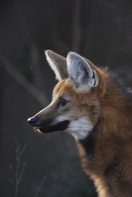 Foxes are such neat animals: Gorgeous Animal, Neat Animal