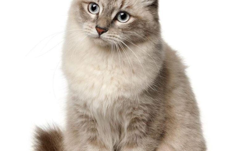 Remedios holísticos para la cistitis de los gatos | Muy Fitness