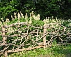 I would love to build a twig fence like this.