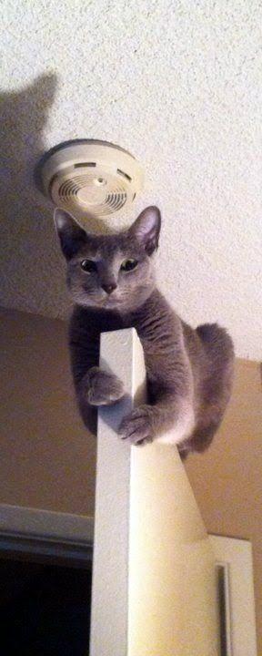 SPIDER CAT!!!