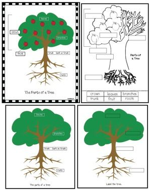 Apple activities: FREE color, cut & label the parts of an apple tree.  Includes color posters, plus a black & white worksheet.