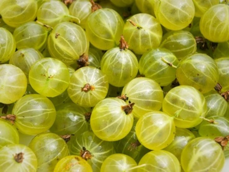 HAVE YOU EVER TRIED GOOSEBERRIES? http://answerangels.com.au/have-you-ever-tried-gooseberries/