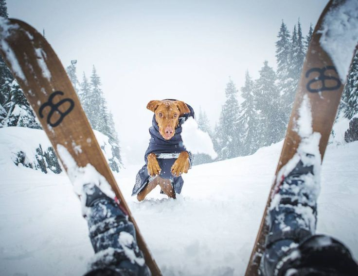Playing in a snowstorm; every year we try to get up to the local ski slopes before they open so mom can practice her skiing with me! #hellobc #vancouverisawesome #dailyhivevan