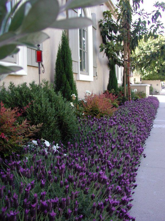how to choose plants for front of house