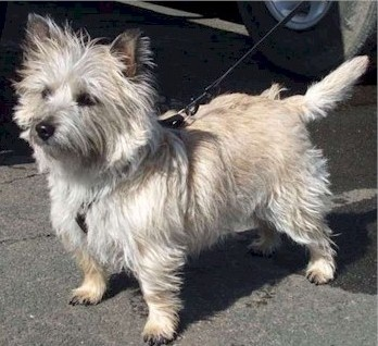 Col. Potter Cairn Rescue Network: Please Give a Warm Welcome to Addy!