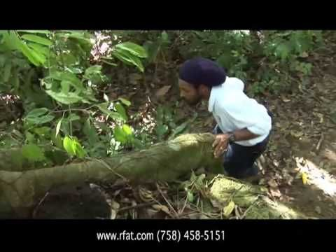St Lucia's Rainforest Sky rides and zip line.    Caribbean Adventure.