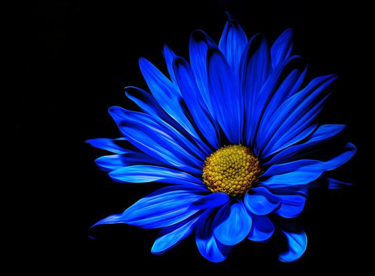 Night Time Blues by Alex Martin - Photo 218198537 / 500px