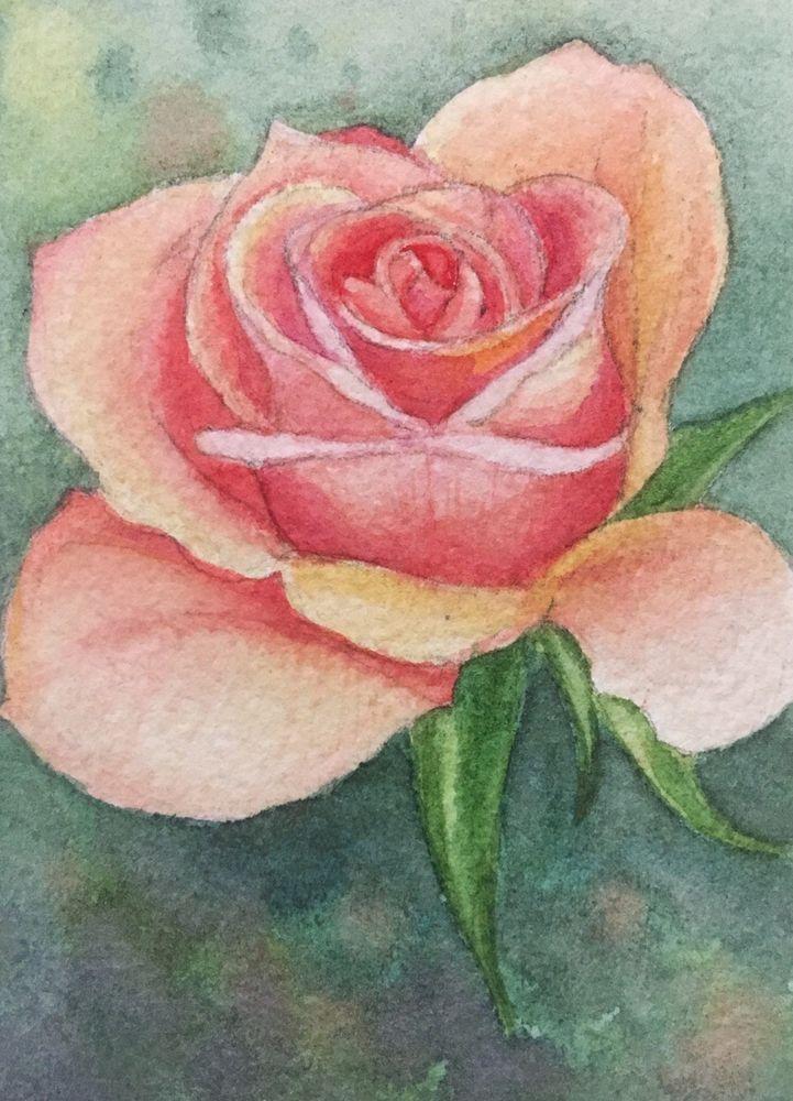 Peach Pink Rose Flower Original Watercolor Painting Aceo Art Card Ebay Watercolor Flowers Watercolor Sketch Painting