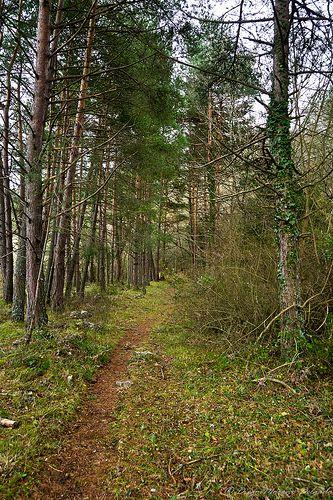 Camino entre los árboles - Path through the trees
