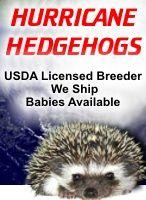 Hedgehog care tips