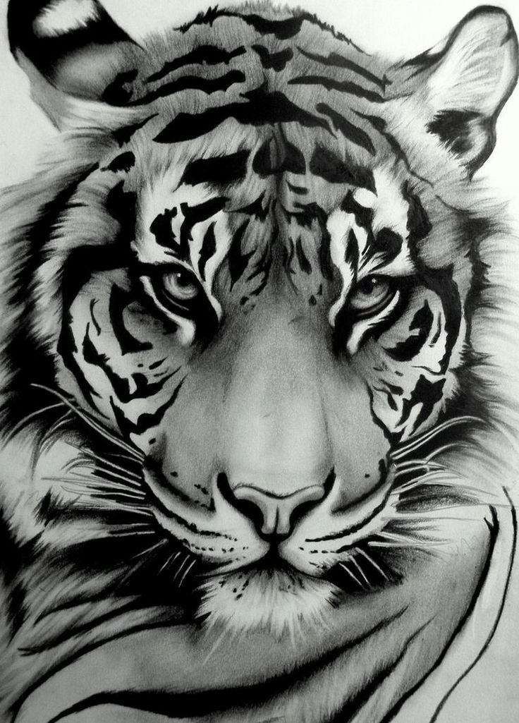 Sumatran Tiger by ~artistelllie on deviantART
