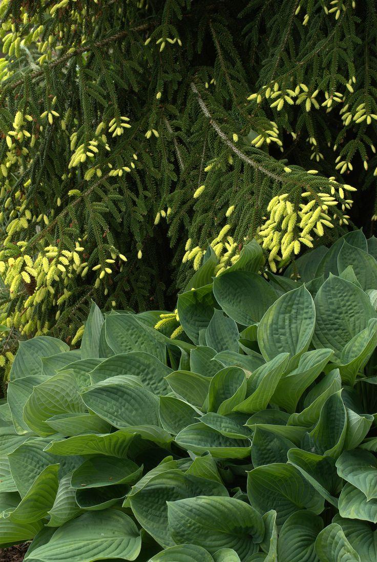 die besten 17 bilder zu rock garden auf pinterest | gärten, Best garten ideen