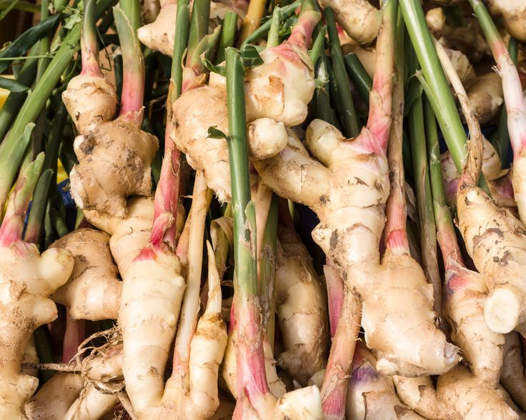 Ginger is known to produce a hot, fragrant kitchen spice!