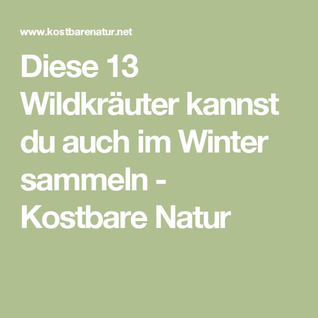 Diese 13 Wildkräuter kannst du auch im Winter sammeln - Kostbare Natur