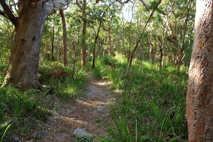 australian native coastal landscaping - Google Search