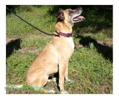 Luz busca adopción  #Adopción #adopta #adoptanocompres #adoptar #LealesOrg  Contacto y info: Pulsar la foto o: https://leales.org/animales-en-adopcion/perros-en-adopcion/luz-busca-adopcion_i376 ℹ  luz fue rescatada de una perrera de sacrificio por que la iban a sacrificar por ser feavino con su cachorro que ya a sido adoptado ahora solo falta ella que es una preciosidad aparte de ser muy carñosa con todos    Acerca de esta publicación:   Esta publicación NO ha sido creada por Leales.org y NO…