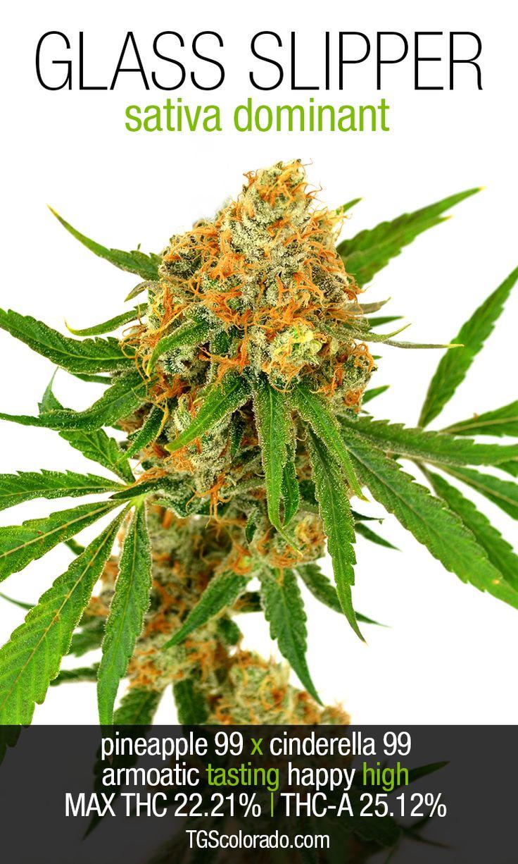 Glass Slipper | Repined By 5280mosli.com | Organic Cannabis College | Top Shelf Marijuana | High Quality Shatter