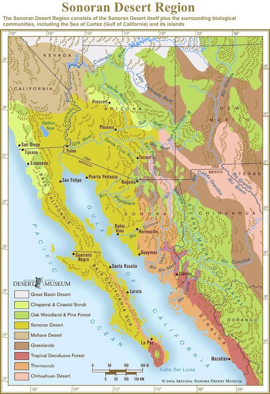 Best 25 Map of phoenix arizona ideas on Pinterest  Az info