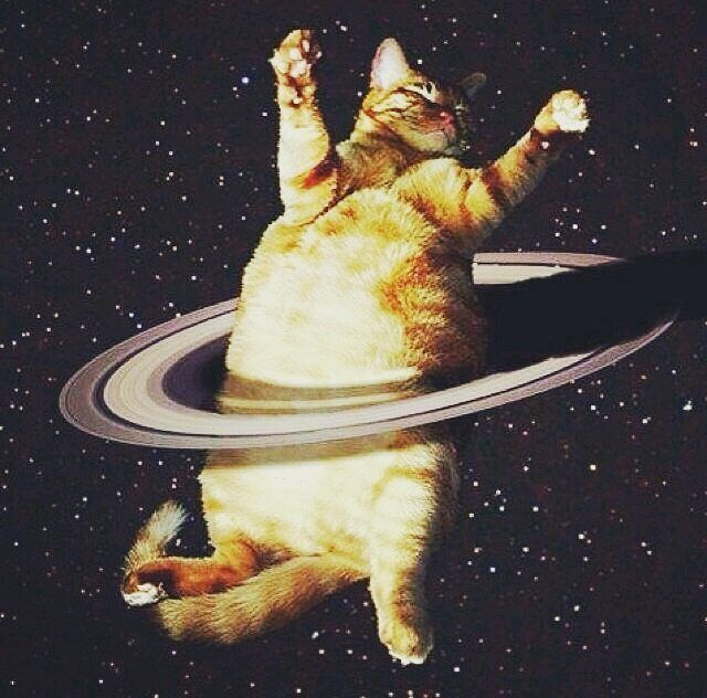 22 best Cats In Space! images on Pinterest   Adorable ...