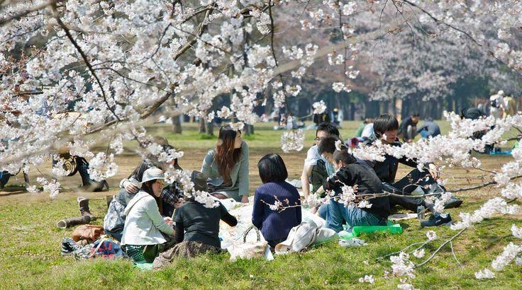 Parque Yoyogi, Tokio.
