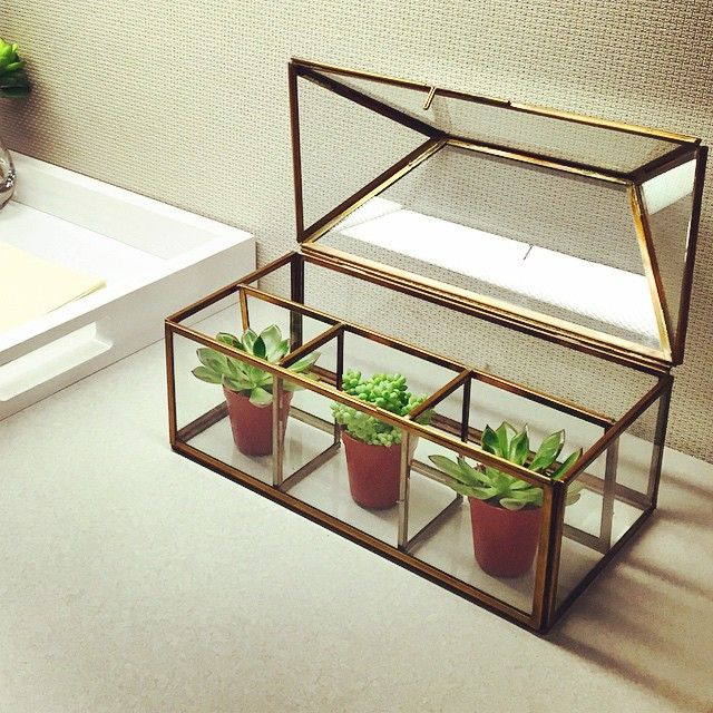 """Make Your Cubicle Suck Less -- Get a plant to add some color and life with a display like the """"Clarus House Box"""" from Crate & Barrel and some tiny succulents!"""