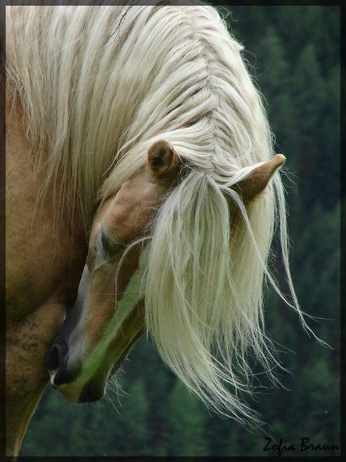 palominoEquine, Engagement Photos, Beautiful Hors, Blondes Beautiful, Hors Pictures, Palomino Horses, Horses Photography, Hors Photography, Animal