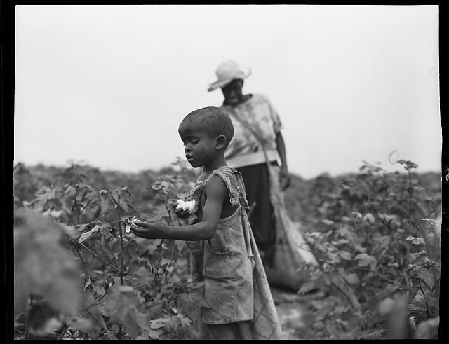 African American child,woman,labor,employment,work,picking cotton,South,1951