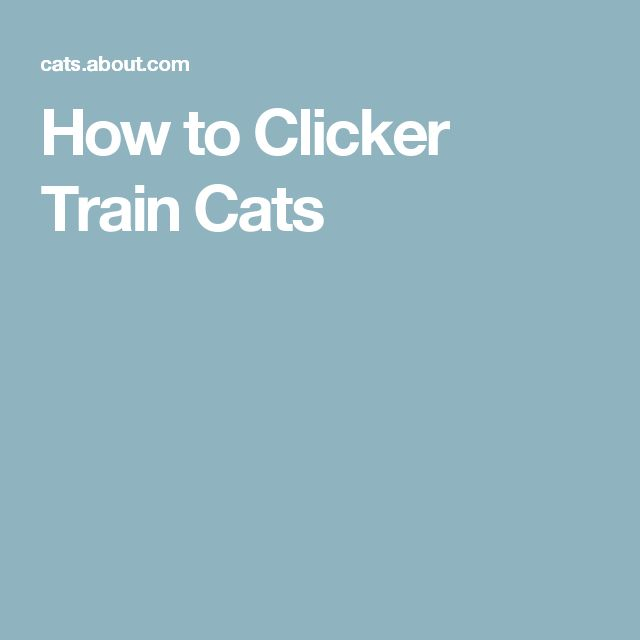 Best Cat Training Images On Pinterest Cat Products Dog Cat - Hilarious motivational cat post notes found train