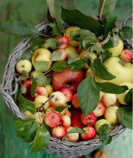 Apples. | Autumn. | Pinterest | Apples and Search