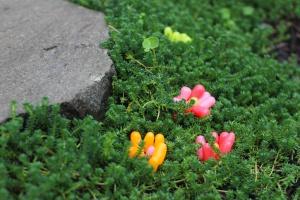 Candy Garden.