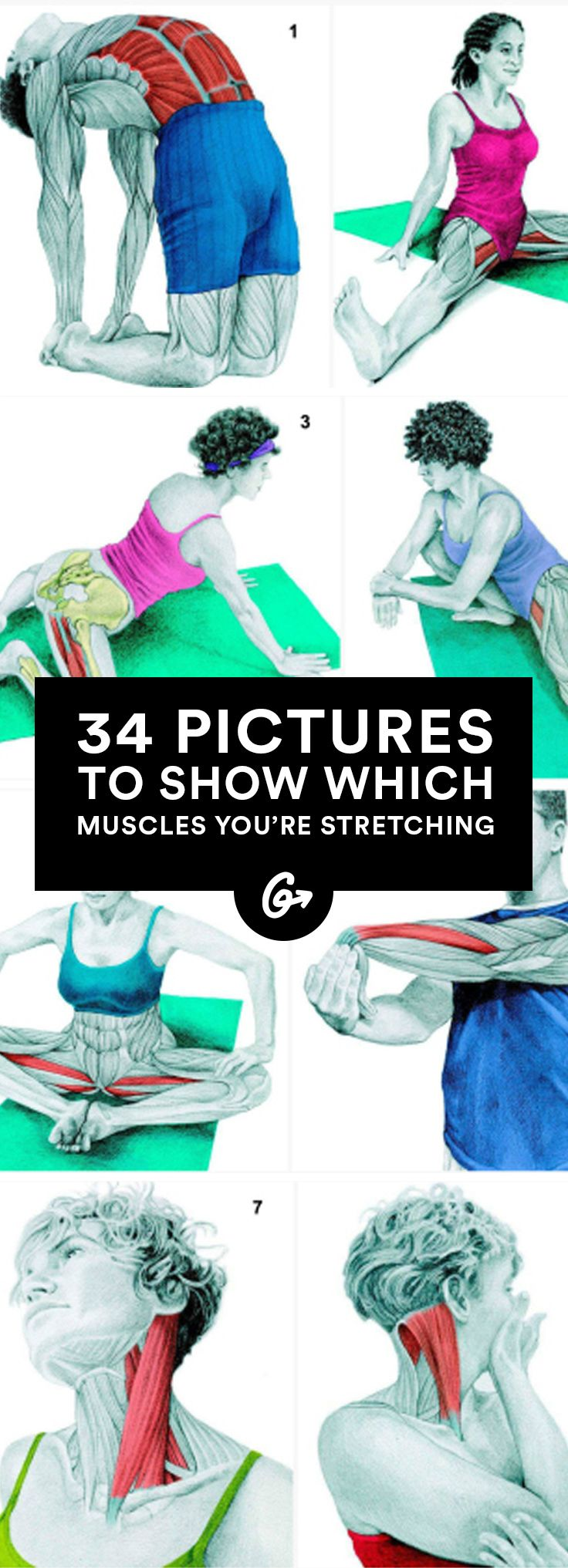 Learn Which Muscles You Are Stretching via greatist: Choose the best stretches for you and learn how to do them correctly to achieve your goals while avoiding injury. #Illustrations #Muscle_Stretches #Pilates #Yoga