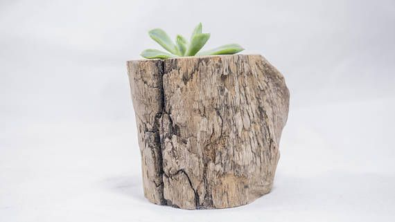 Hey, I found this really awesome Etsy listing at https://www.etsy.com/ca/listing/562907107/drift-wood-plant-succulent-pot-air-plant