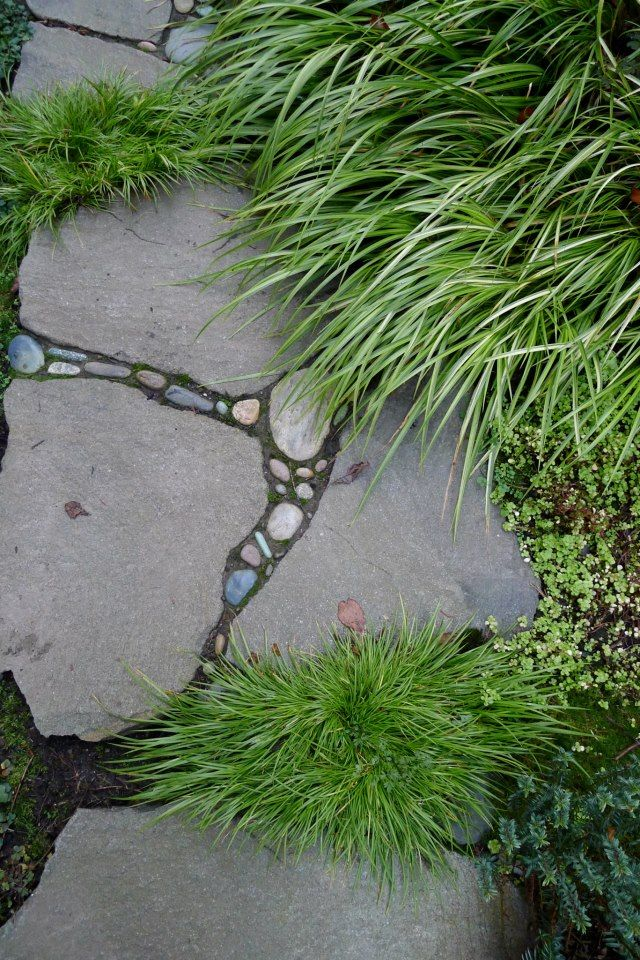 Love the different textures...Gardens by Jeffrey Bale (facebook.com/GardensByJeffreyBale)