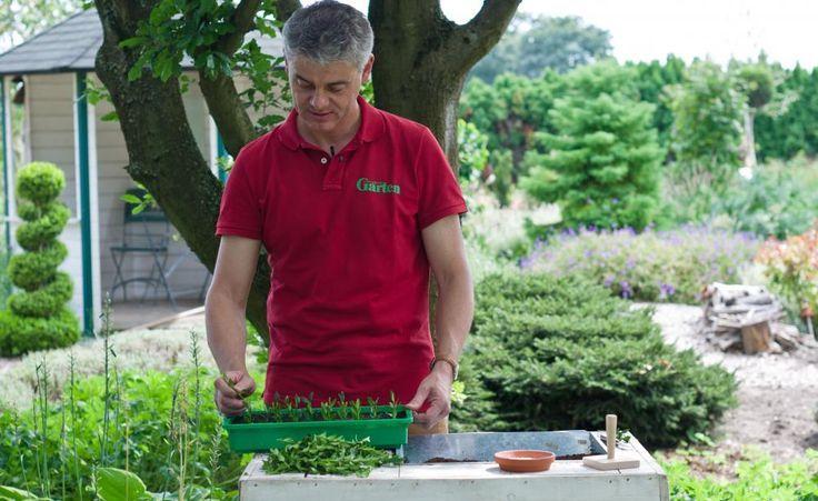 #anzuchtsdatum #anzuchtaufderfensterbank #anzuchttopf #anzuchtgarten #pflanzenfreude #pflanzenvielfalt #pflanzenfresser #pflanzenfarbe