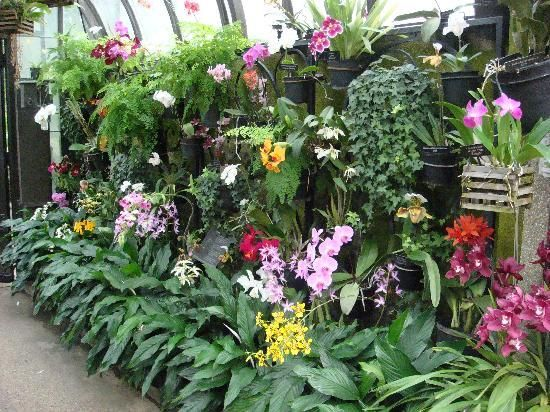 Orchid House at Longwood Gardens