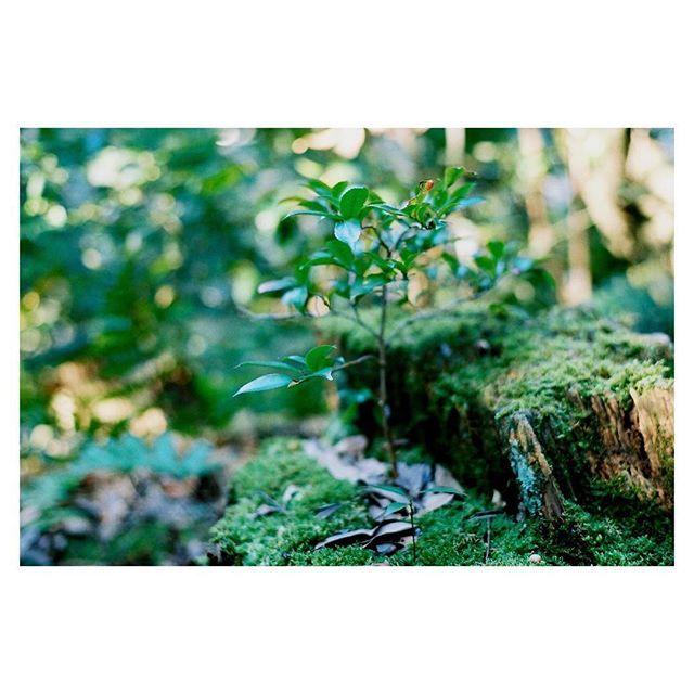 【nfilm1014】さんのInstagramをピンしています。 《緑と緑と緑  #フィルム写真#analog#lomography400film#pentaxlx#ペンタックスlx#green#緑#ジブリ#森#lomography#35mm》