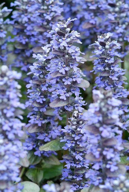 Veel mensen denken dat planten niet groeien in de schaduw. Er zijn genoeg mooie schaduwtuinen. Laat je schaduwborder schitteren met deze planten.