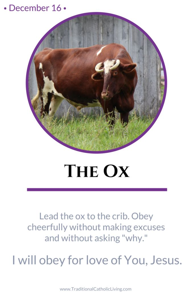 december 16 the ox lead the ox to the crib obey cheerfully without making