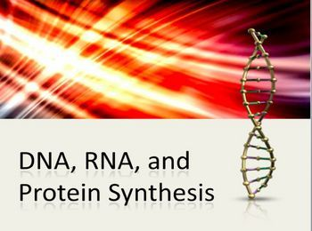 protein synthesis quiz Protein synthesis this activity contains 5 questions which of the following events occurs during transcription which of the following is a correct statement about mrna the site of translation is : which.