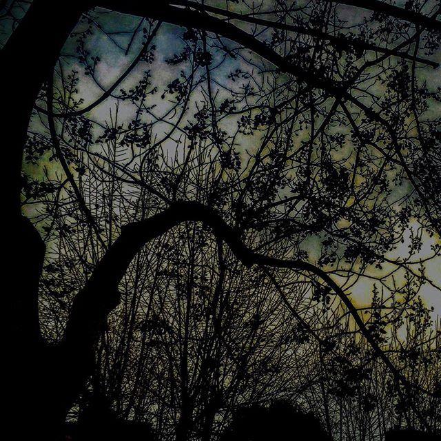 【magdalenakitty】さんのInstagramをピンしています。 《Dawn in Siena, Italy  シエナの夜明け #dawn #morning #Italy #italia #siena #italyofinstagram #dawnofphoto #trees #sombresociety #artofvisuals #moody_nature #moodygrams #colors #nature #naturephoto #quietmorning #ppschool #lonelyplanetitaly #イタリア #シエナ #夜明け #朝 #自然 #森 #forest #ファインダー越しの私の世界》