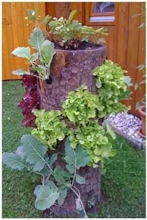 Garden: Log Planter  Log Mushrooms